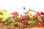 Autumn or fall background with colorful yellow and red berries and leaves on a wooden table over white with copyspace