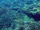 The sea bed covered in an assortment of hard plate coral formations