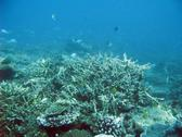 Australias Great Barrier reef teeming with schools of reef fish