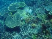 An underwater scene, and array of corals on the seafloor