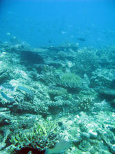 Coral reef and an assortment of reef fish