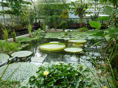 a large tropical plant house with pond and giant lilys