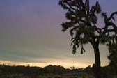 silhouette of a joshua tree in the joshua tree national park, california
