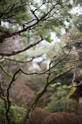 a backdrop image of tree branches with water droplets