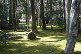 Moss covered ground in a wooded areas of the gardens around Ryoan Ji - Kyoto, Japan